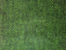verde gessato nero